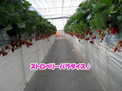 IMG_5319のコピー