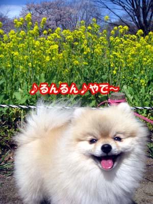 IMG_5570のコピー
