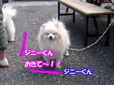 IMG_6580のコピー