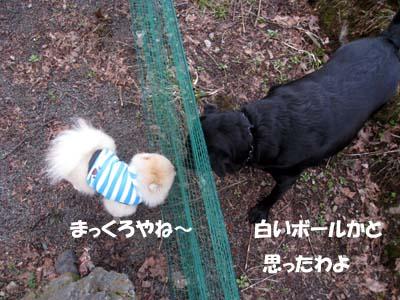 IMG_6834のコピー