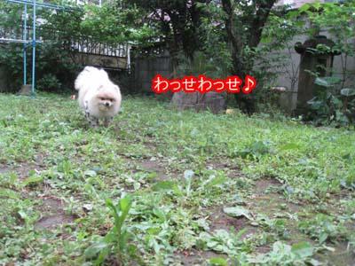 IMG_7970のコピー