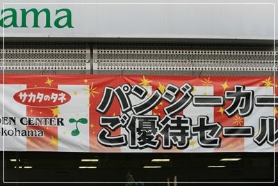 IMG_6249sakata.jpg