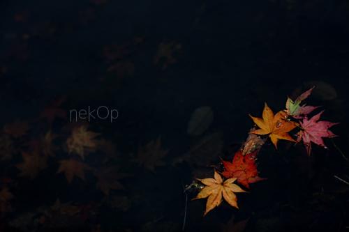 0D2A6805.jpg