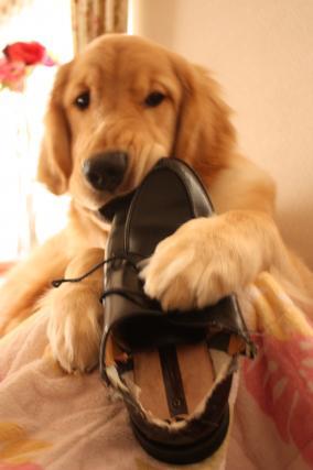 パパ靴 ①