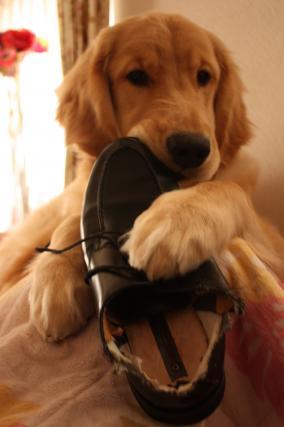 パパ靴 ②