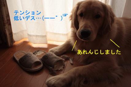 IMG_6718.jpg