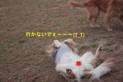 IMG_9050.jpg