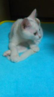 猫20110828
