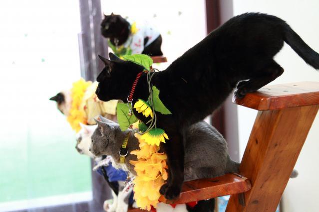黒猫ってイイよね(*´д`*)
