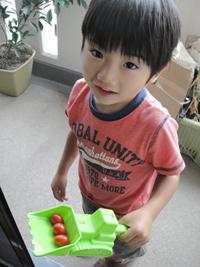 トマト収穫02