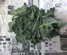 ただいま工事中です-ブロッコリーの葉っぱです
