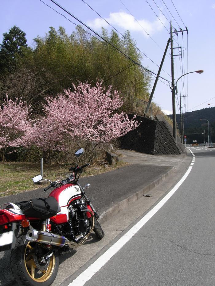 せっかくなので、桜とツーショットでパシャリ☆