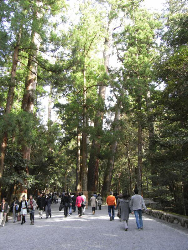 神宮林と呼ばれる、造営に使用される檜の林が神秘的ですね~☆