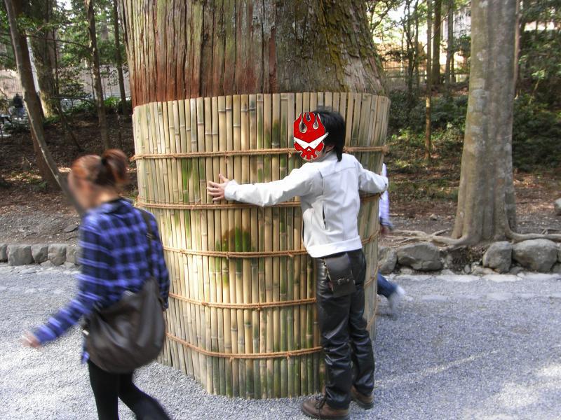 檜が遷宮の御用材として使用できるまで育つには、200年もの歳月が必要なんだそうで、これより大きい木がそこかしこに生えてます。