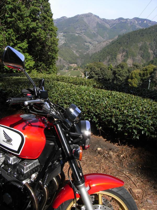 丘陵な丘に茶畑がず~っと続いておりました