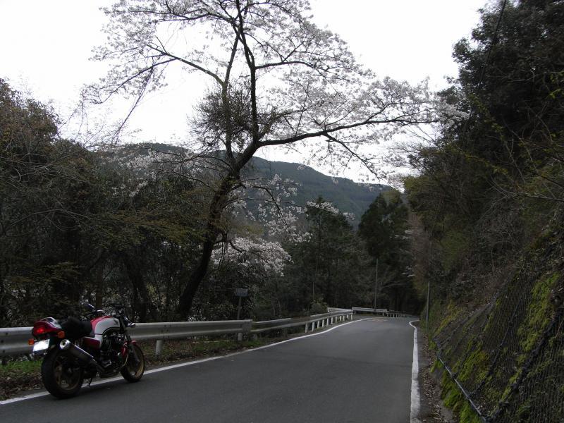 撮影:秋葉山の鮎釣東雲名春野線(天竜川へ繋がる気田川沿いのワインディング)
