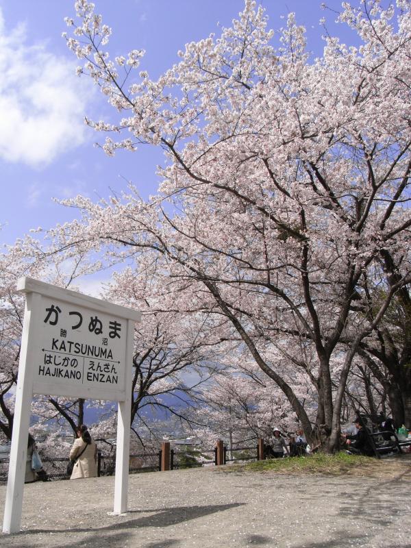 旧ホームの名残と、桜と、花見客と・・・(笑