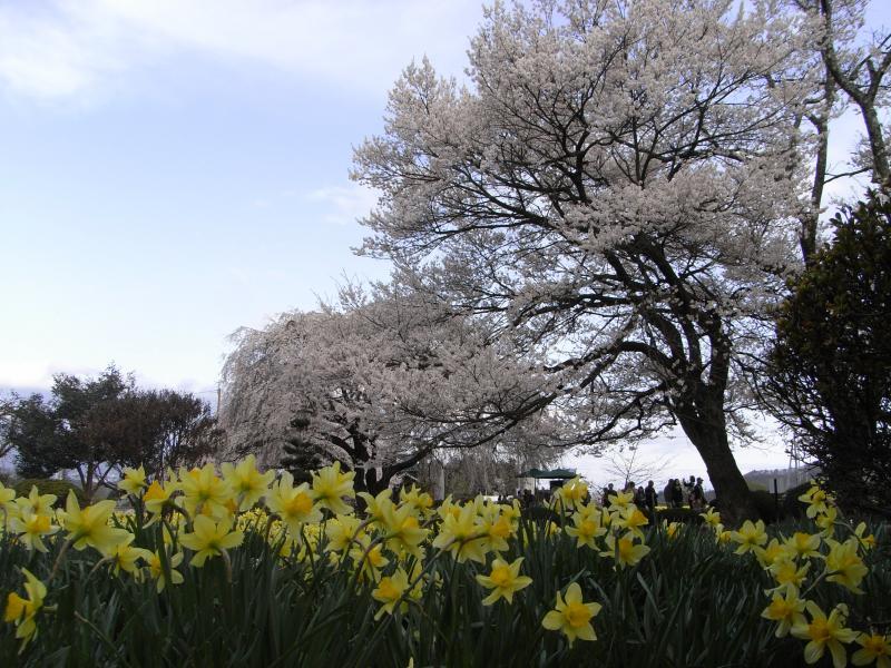 野に咲く~♪花の様に~♪フンフフンフン~♪