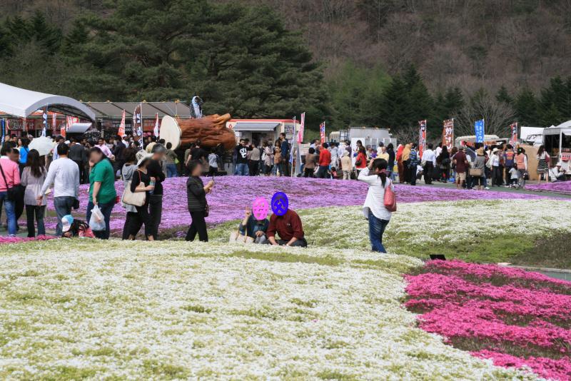 一面桜の絨毯ってやつですね♪