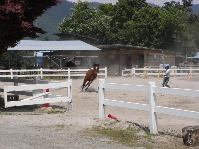 馬も曲がるときはしっかりバンクしてますな~
