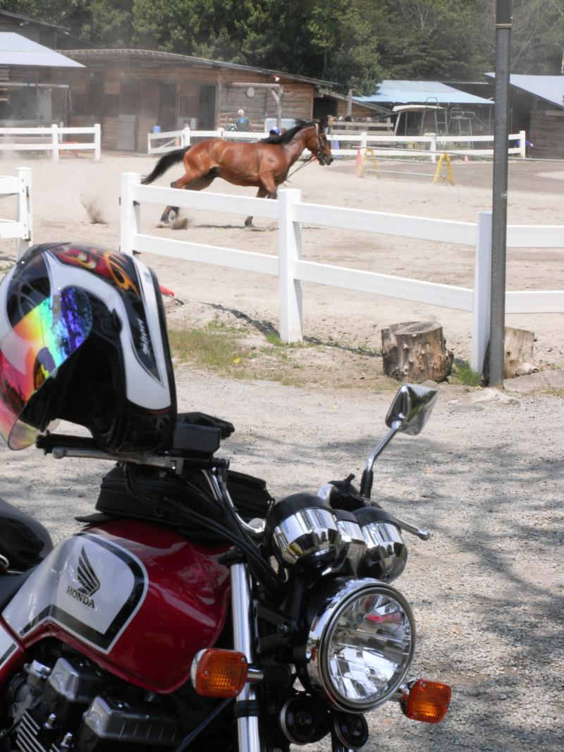 鉄の馬と生の馬のコラボw