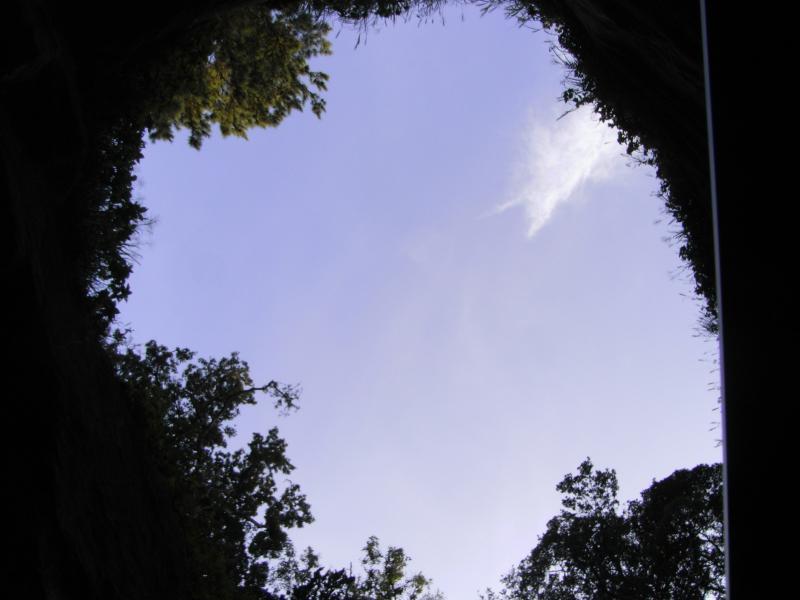 晴れ渡る空と木々の茂る大地の不思議な光景が♪