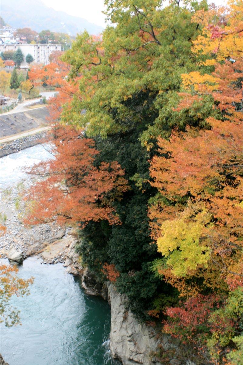 桂川と紅葉が綺麗でした☆