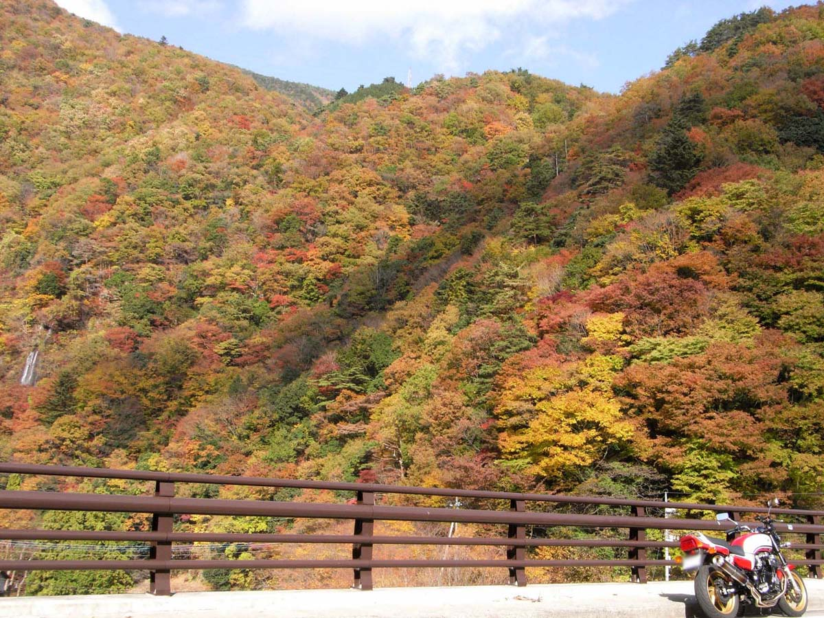 紅葉生い茂る山の斜面に滝が流れてて面白い光景でした☆