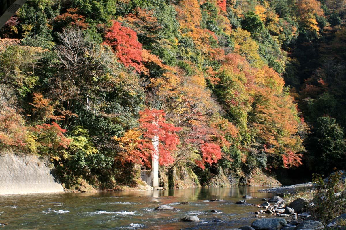 綺麗な道志川の流れと紅葉が何とも美しかったです☆