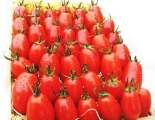ピカピカのグローウェルトマト