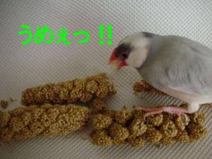 恒例の粟穂