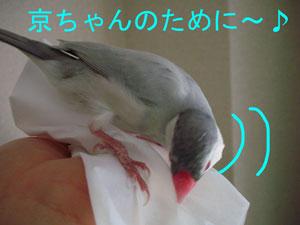 巣作り練習