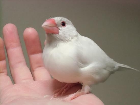 別鳥みたい!?
