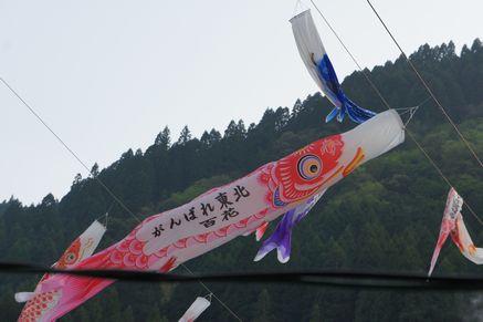 杖立温泉_鯉のぼり2