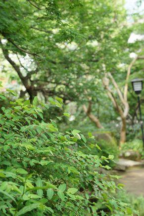 秋月温泉5