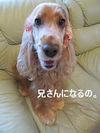 bokuni-san2012001.jpg