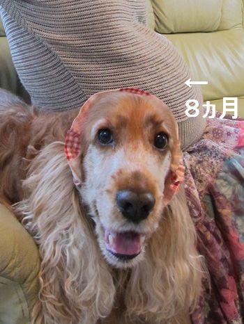 bokuni-san2012002.jpg