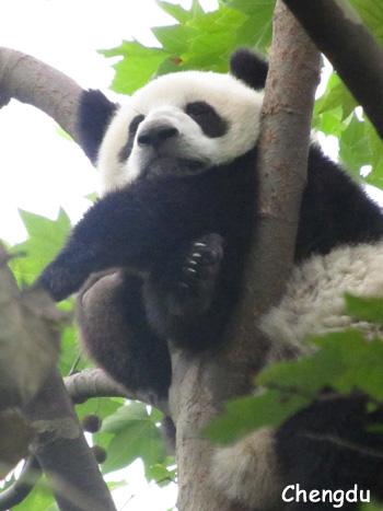 木の上で遊んでる