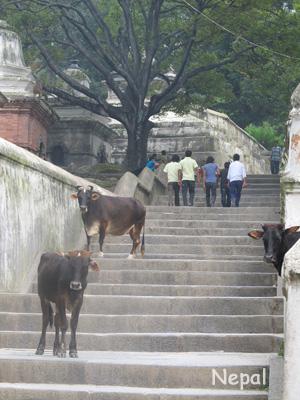 普通に階段を行く