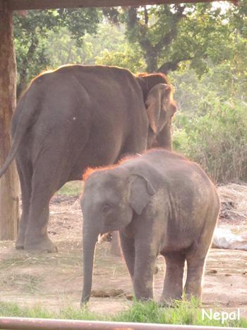 象の親子だぞう。