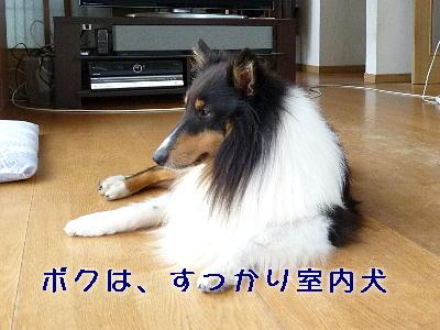 101008_04.jpg