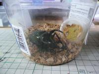 昆虫クジを引いてきました!