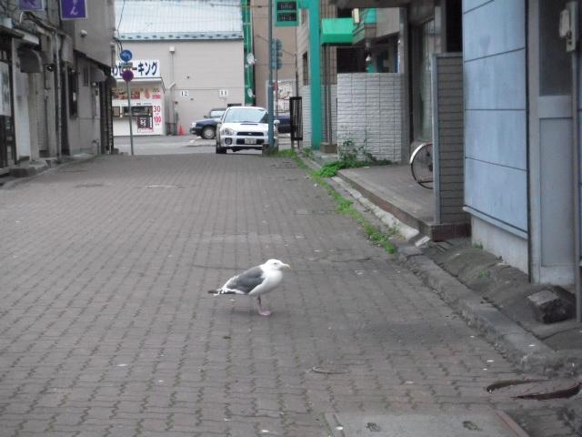 2012_0901kusiro 016