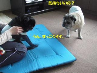 2012_0413massa0004b.jpg