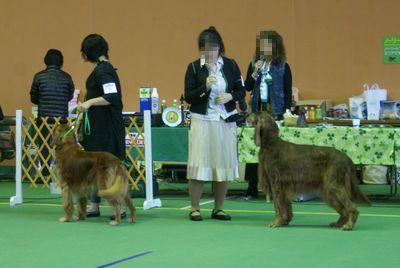 20111106Contraceptivedog