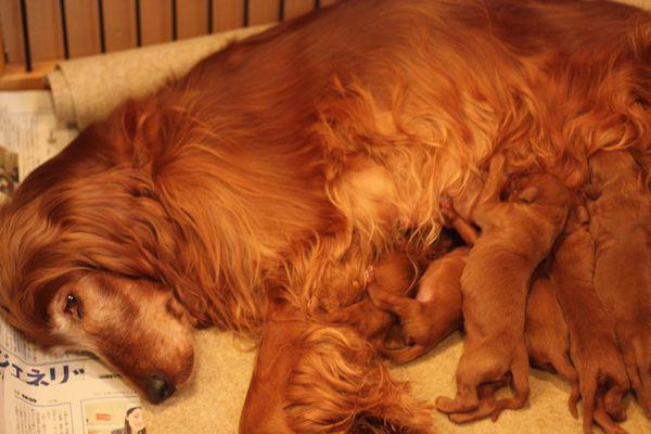 20130104-puppy2
