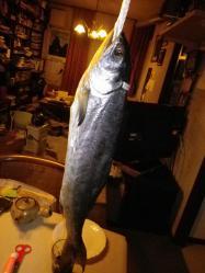 鮭 (2)