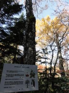 斜里岳 三井コース 047