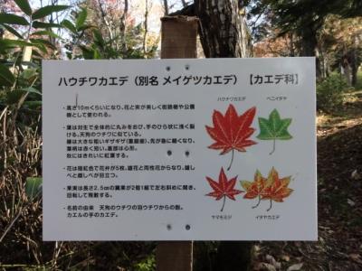 斜里岳 三井コース 134