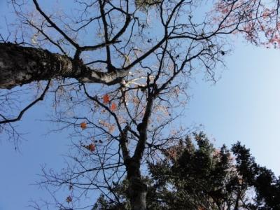斜里岳 三井コース 135